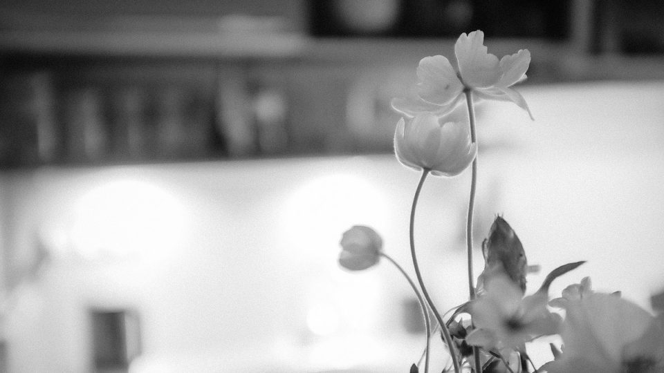Kytky vkuchyni | © Jsem Jary