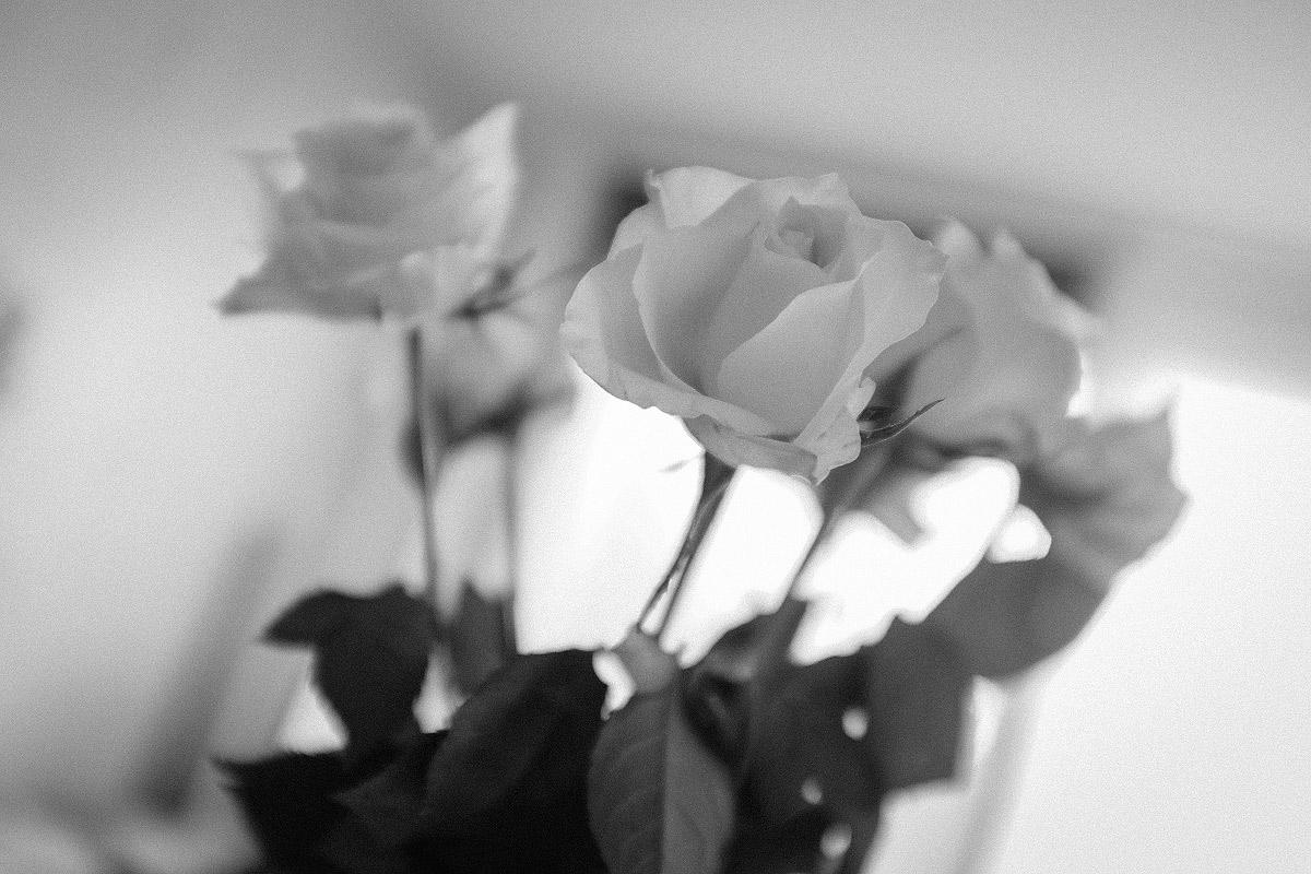 Růže v kuchyni | © Jsem Jary