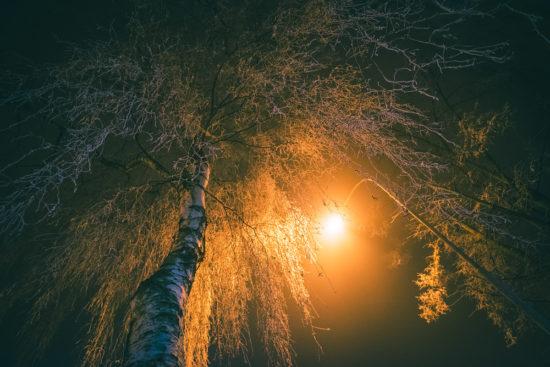Bříza a lampa | © Jsem Jary