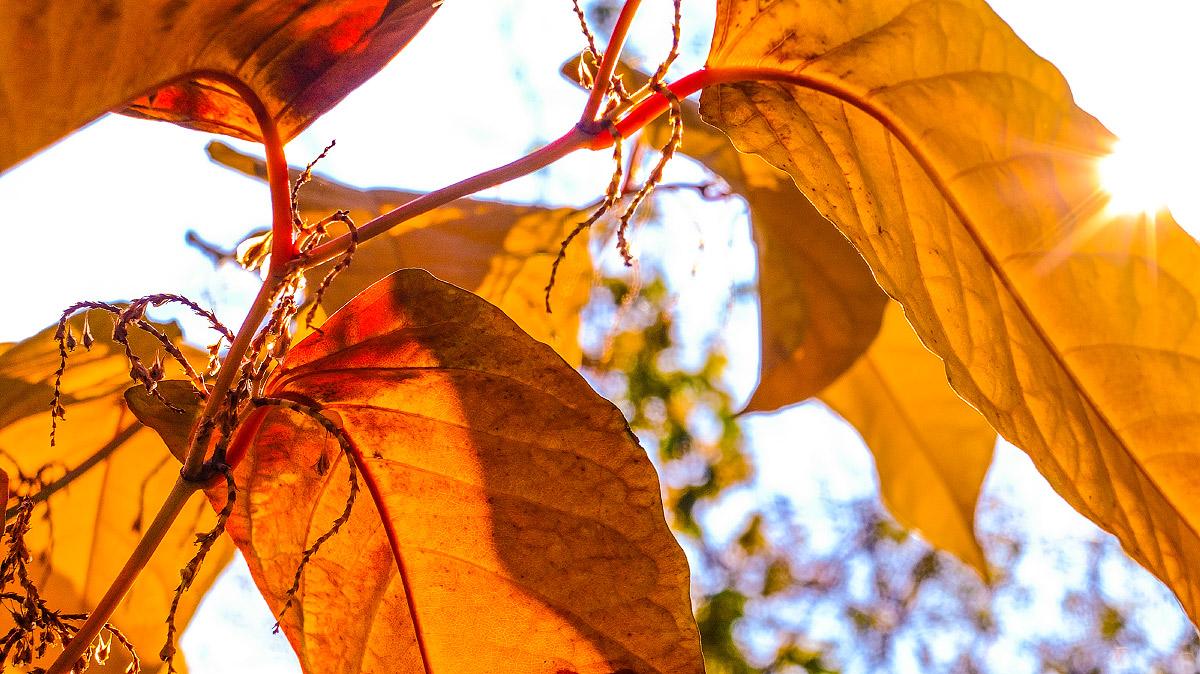 Barvy podzimu   © Jsem Jary