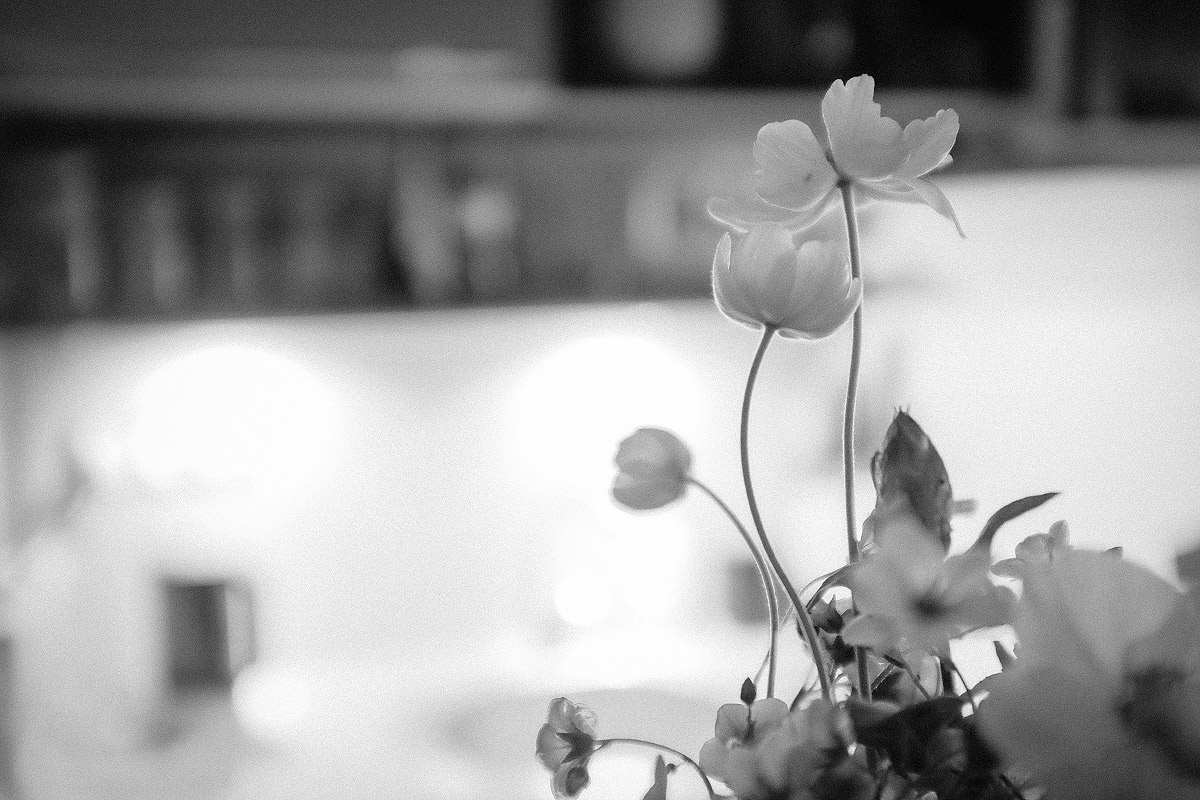 Kytky v kuchyni | © Jsem Jary