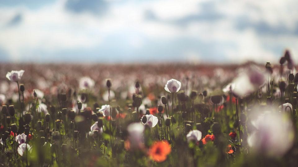 Makový pole uďáblický skládky | © Jsem Jary