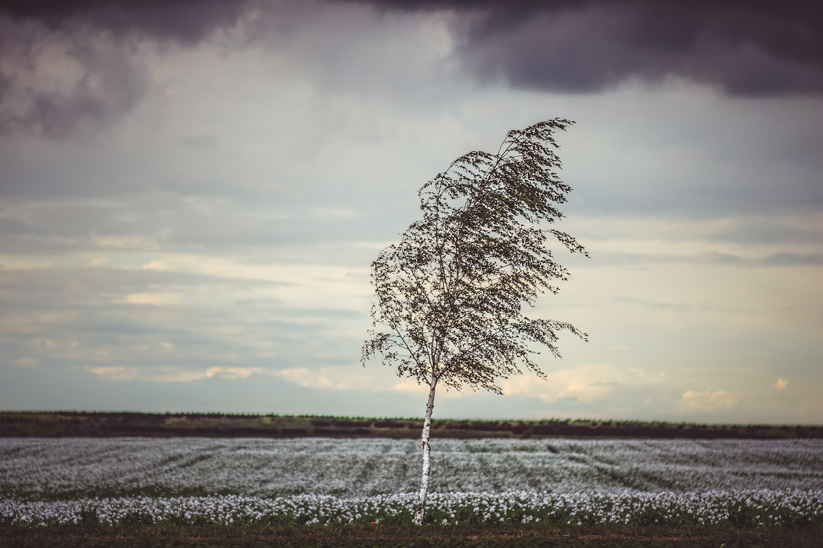 Makový pole u ďáblický skládky   © Jsem Jary