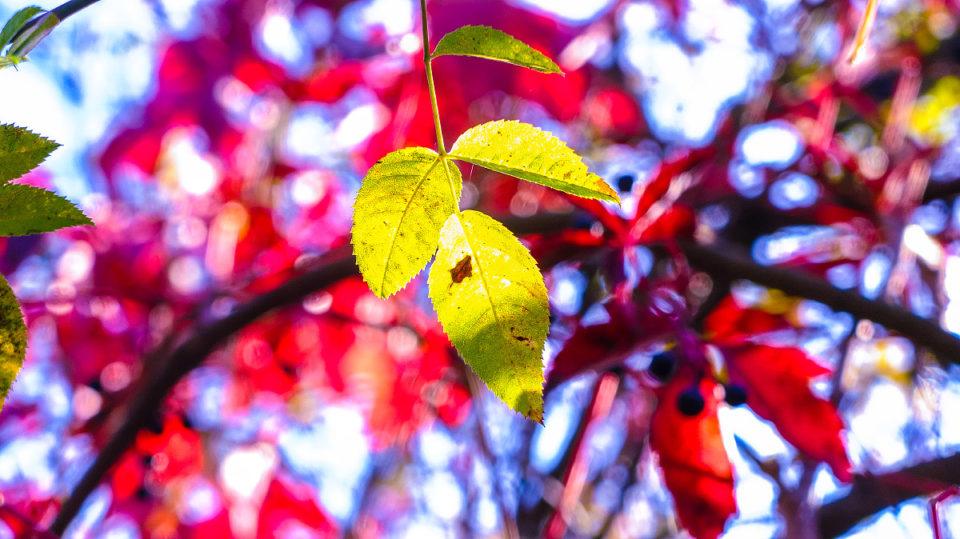 Bláznivej barvu podzimu | © Jsem Jary