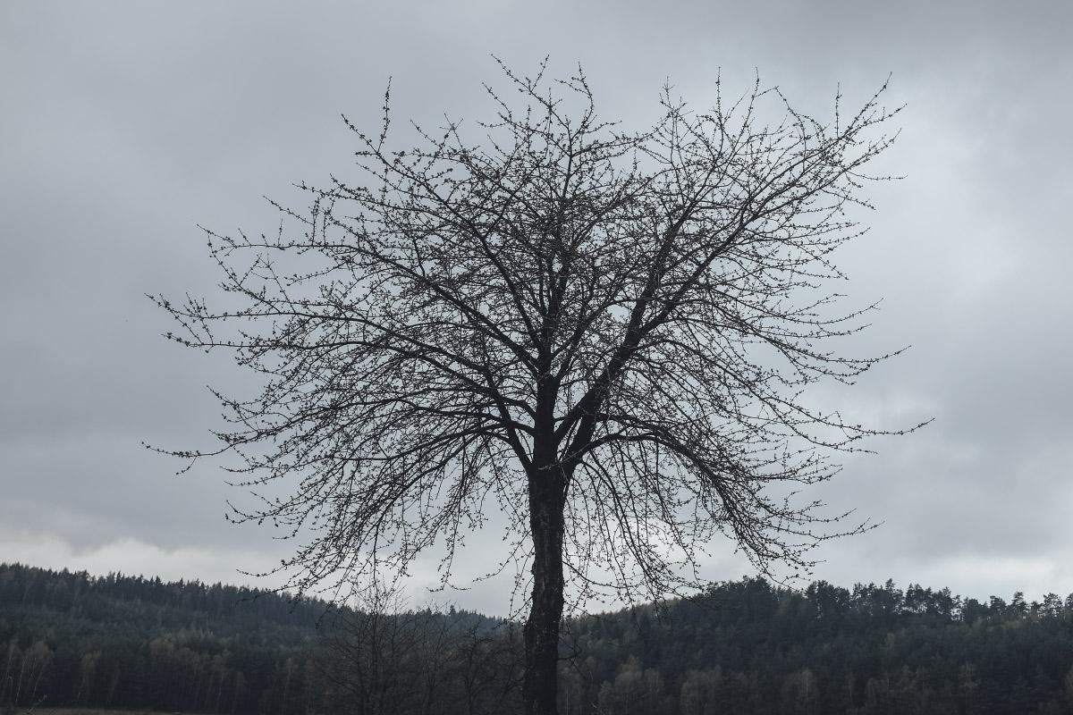 Aprílová Hvezdička   © Jsem Jary