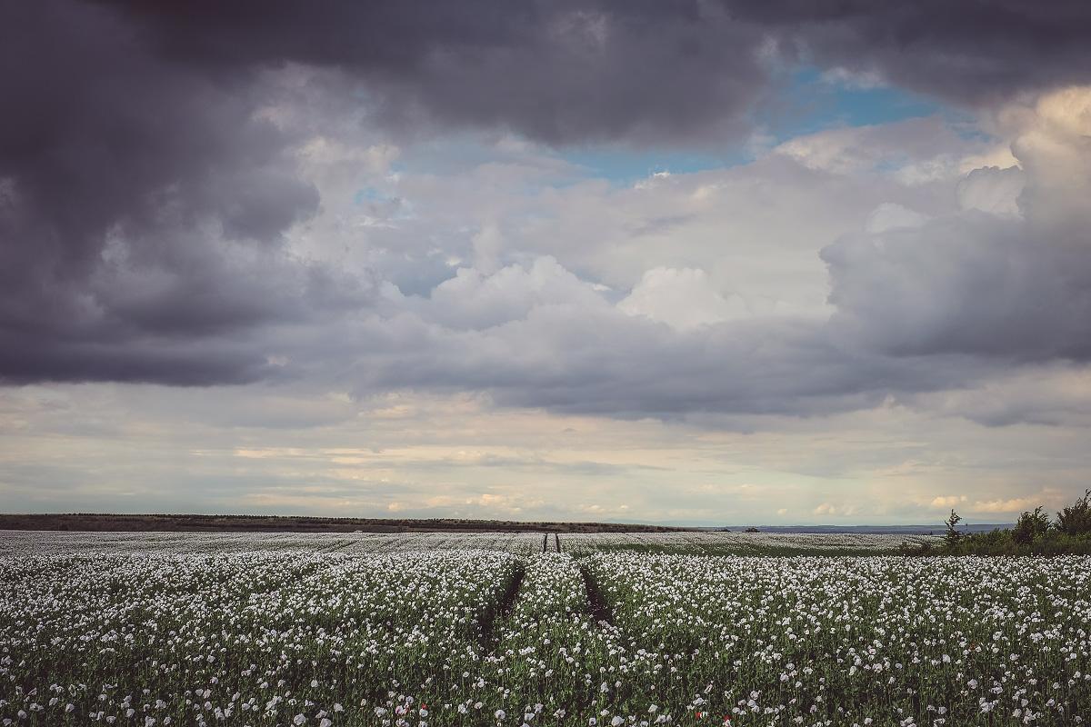 Makový pole u ďáblický skládky | © Jsem Jary